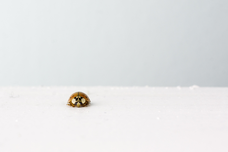 Beetle on Snow
